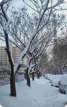 Huge Snowfall in Seoul Jan 2010small